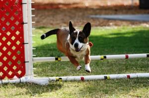 Shelly Jump