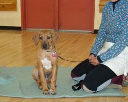 Puppy Manners Class